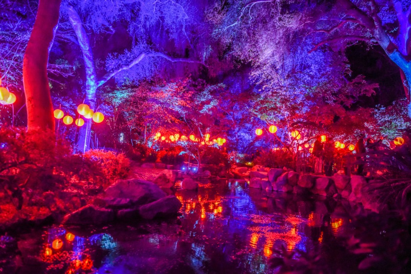 Descanso gardens enchanted forest of light 2017 sirens - Descanso gardens enchanted forest of light ...