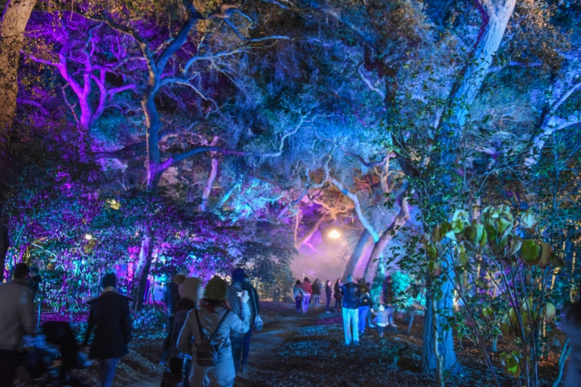 The moment we step foot inside descanso gardens enchanted forest of light the world suddenly starts to slow down get still and fall silent